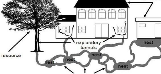 termite-entering-process