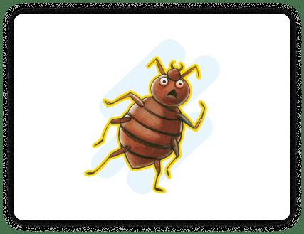 bedbug-min